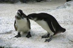 Arktische Liebe Stockbilder