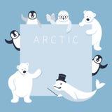 Arktische Tier-Charakter-Show-Darstellung, Rahmen Stockbild