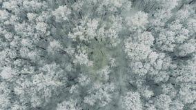 Arktische Tundra, gefrorene Bäume stock video footage