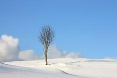 Arktischer Baumhimmel u. -wolken Stockbilder