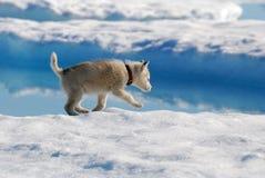 Arktischer Forscher stockbild