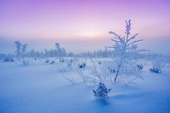 Arktischer Frost Stockbilder
