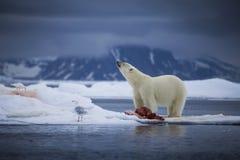Arktischer Schauer Stockbild