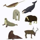 Arktisk djursamling Royaltyfri Fotografi