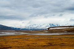 Arktisk tundra i sommar, Svalbard royaltyfri fotografi