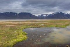 Arktisk tundra i sommar, Svalbard, Norge royaltyfria foton