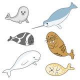 Arktiska marin- däggdjur ställde in delfin och skyddsremsor Bild för vektortecknad filmfärg Royaltyfria Bilder