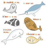 Arktiska skyddsremsor och delfin för marin- däggdjur Gulliga marin- djur för vektor Arkivbilder
