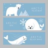 Arktiskt baner, isbjörn, skyddsremsa, Belugaval Vektor Illustrationer
