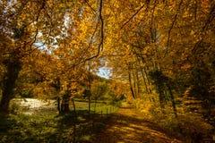 Arlesheim (Ελβετία) το φθινόπωρο Στοκ Φωτογραφία