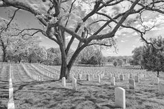 Arlington cemetery graveyard in black and white Royalty Free Stock Image