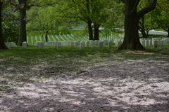 Arlington cemetery graveyard Royalty Free Stock Image