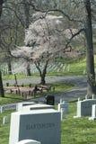 Arlington Cemetery1 nacional Foto de Stock Royalty Free