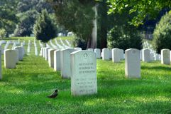 Arlington Cemetery Pledge. Arlington Cemetery has a gravestone that pledges to always remember all soldier's sacrifice. Red robin seems to be reading inscription Royalty Free Stock Photos