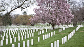 Arlington Cemetery in Washington DC Royalty Free Stock Photography