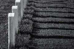 Arlington cmentarz Gravesites obraz royalty free