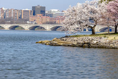 Arlington Memorial Bridge in Spring. Cherry trees bloom alonth ePotomac River near the Arlington Memorial Bridge in Washington DC stock image