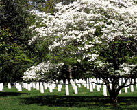 Arlington National Cemetery. Tombstones at Arlington National Cemetery Royalty Free Stock Image