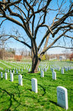 Arlington National Cemetery,. Grave Stones Stock Photography