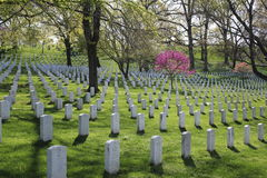 Arlington National Cemetery in Spring Royalty Free Stock Photography