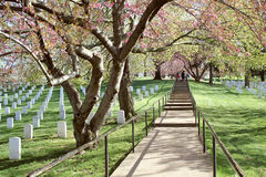 Arlington National Cemetery in Spring Royalty Free Stock Images