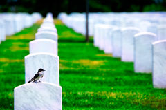 Arlington National Cemetery VA near Washington DC Royalty Free Stock Photo
