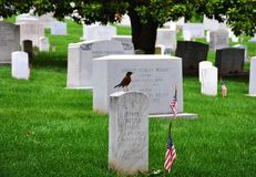Arlington National Cemetery, Virginia, USA stock photos