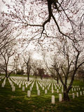 Arlington Nationalkyrkogård Royaltyfri Bild