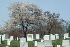 Arlington obywatel Cemetery2 Obraz Stock