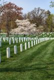 Arlington VA royaltyfri foto