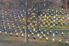Honoring Our Heroes. ARLINGTON, VA/USA - JANUARY 1, 2018: Rays of warm afternoon sunlight shine on wreaths with red bows adorning headstones commemorating the stock photos