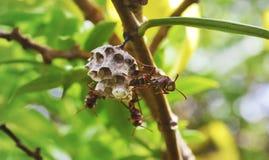 armée d'abeille image libre de droits