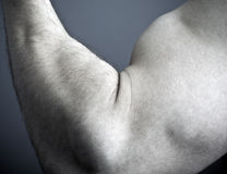 Arm and biceps  Royalty Free Stock Images