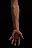 Arm body shapes. Body shapes of an arm full of veins royalty free stock photos