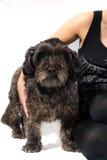 Arm holding dog Royalty Free Stock Photos