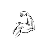 Arm Muscles. (sketch mans hand on white stock illustration