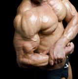 Arm och torso av den muskulösa manliga kroppsbyggaren som böjer biceps Royaltyfri Bild