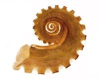 Arm Of Octopus Stock Photos