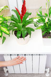 Arm put on  heating white radiator.Windowsill with flowers. Stock Images