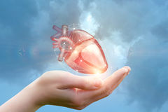 Arm supports the heart. Royalty Free Stock Images