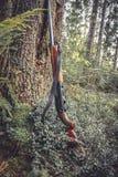 Arma de la caza en el tronco de árbol en bosque durante temporada de caza en colores del vintage Fotos de archivo libres de regalías