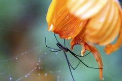 Armadilha da aranha Fotografia de Stock