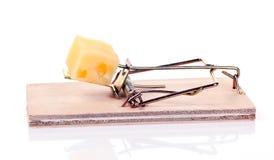 Armadilha do rato Imagens de Stock Royalty Free