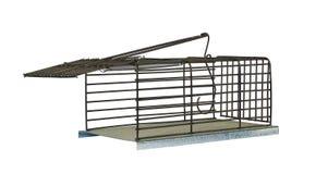 Armadilha para ratos Fotografia de Stock