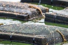 Armadilhas e redes da exploração agrícola da ostra no rio de Damariscotta, Maine foto de stock