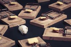 Armadilhas múltiplas do rato com queijo Fotografia de Stock