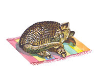 Armadillo Royalty Free Stock Photos