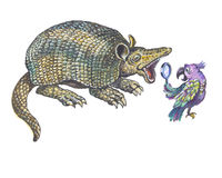 Armadillo and parrot Stock Photos
