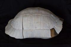 Armadura da tartaruga Imagens de Stock Royalty Free