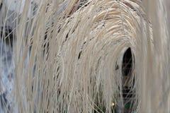 Armadura de bambú fotografía de archivo libre de regalías